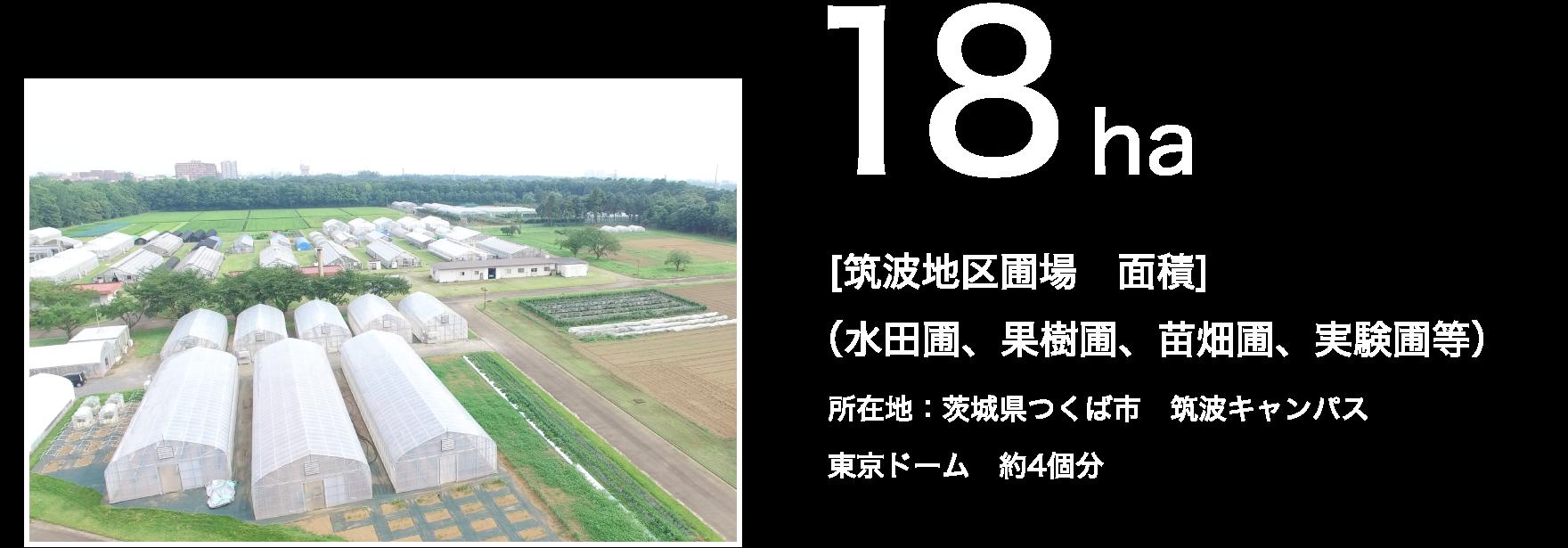 18ha [筑波地区圃場 面積](水田圃、果樹圃、苗畑圃、実験圃等)所在地:茨城県つくば市 筑波キャンパス 東京ドーム 約4個分