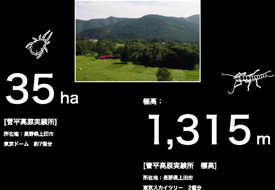 35ha [菅平高原実験所] 所在地:長野県上田市 東京ドーム 約7個分 標高:1,315m [菅平高原実験所 標高] 所在地:長野県上田市 東京スカイツリー 2個分